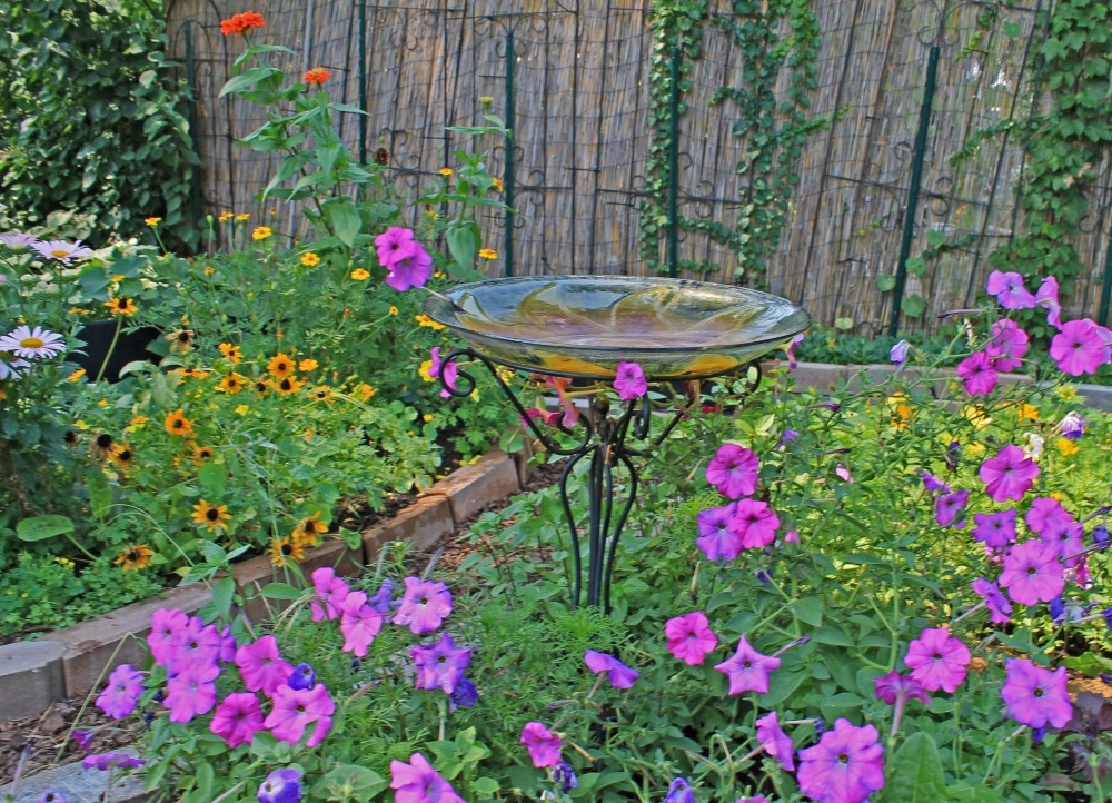 she lets me tuck in a birdbath, heirloom petunias, basil, and heirloom lemon cherry tomatoes between her base...she never complains...