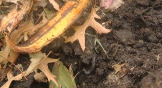 IMG_1700-feeding-soil