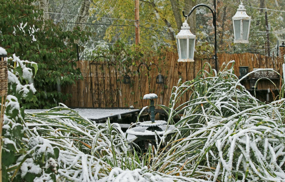 The snow today is quite heavy and pulled down all grasses in the Urban Potager.  Our dining area is usuallly not visible across the yard, but the snow pulled all these tall grasses and plumes to the ground...