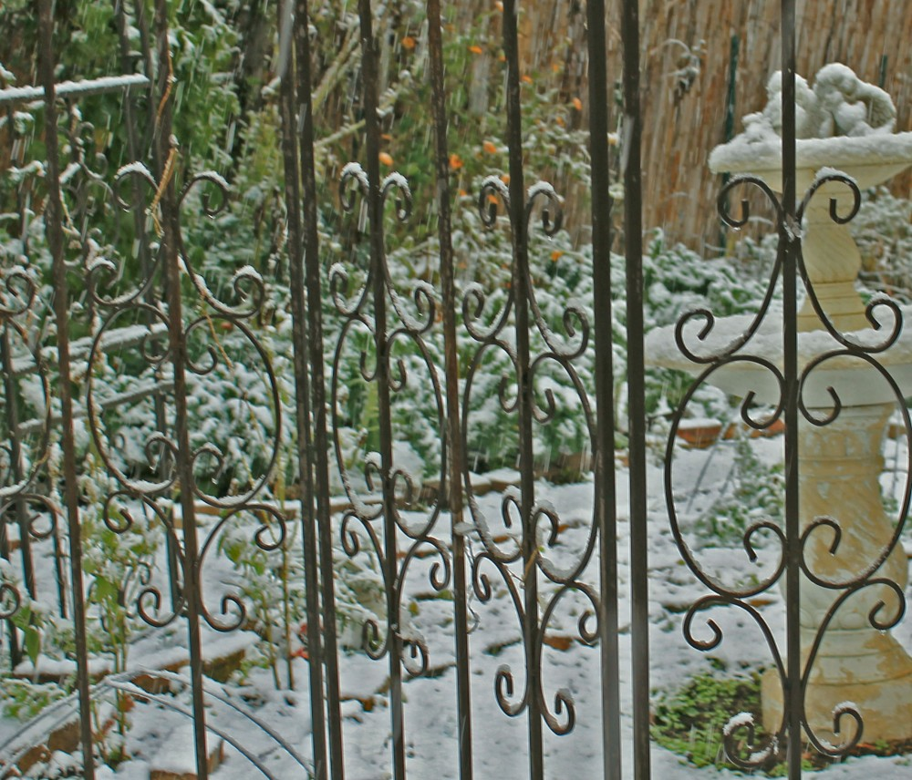Winter garden I added to this fall. I removed some flowers and grasses to enlarge the potager closer to the house. Today we had our first snow of the year. It looks like we are having an early winter this year. I have been working on my winter/ fall garden all year and added some other crops to fall seedlings I placed out in spring.