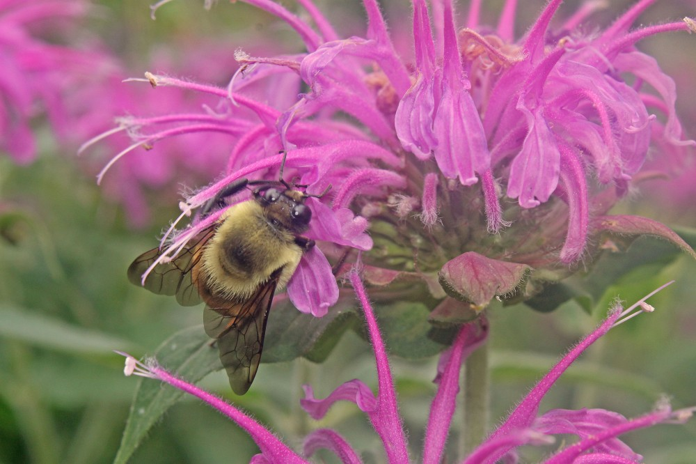 Best Flowers to Plant are those that feed our pollinators....
