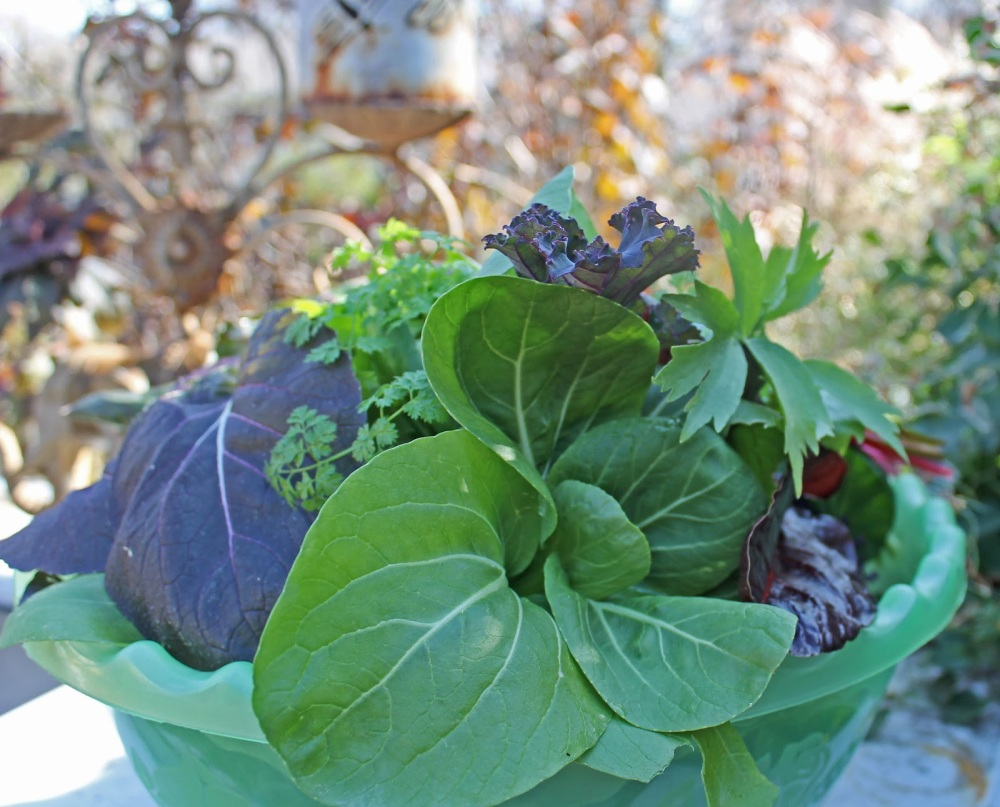Fall Salads from your Backyard!