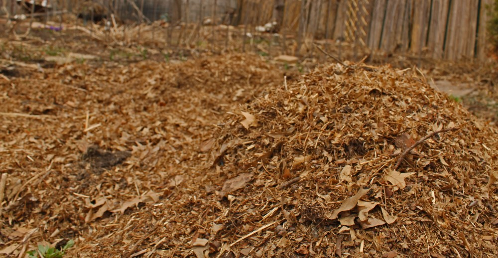 After we get a load of shredded leaves, we load them up in our old garbage cans and spread them on our paths and around our plants