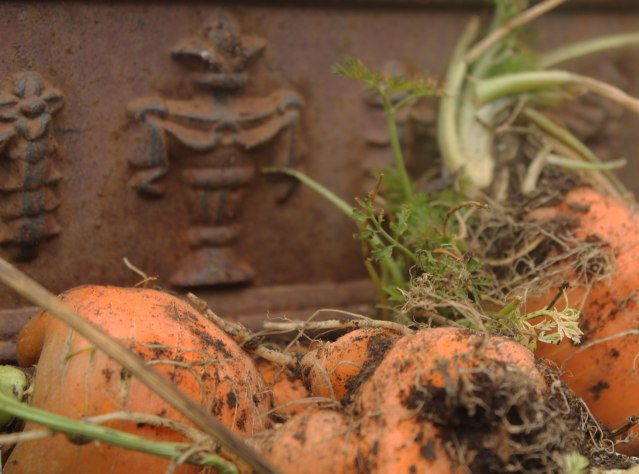 IMG_1694oxheart-carrots