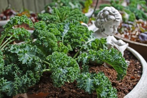 Kale is perfect for City Growing