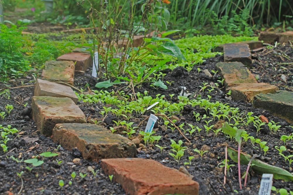Succession Planting of Fall Lettuce, Arugula, Mustard, and carrots...