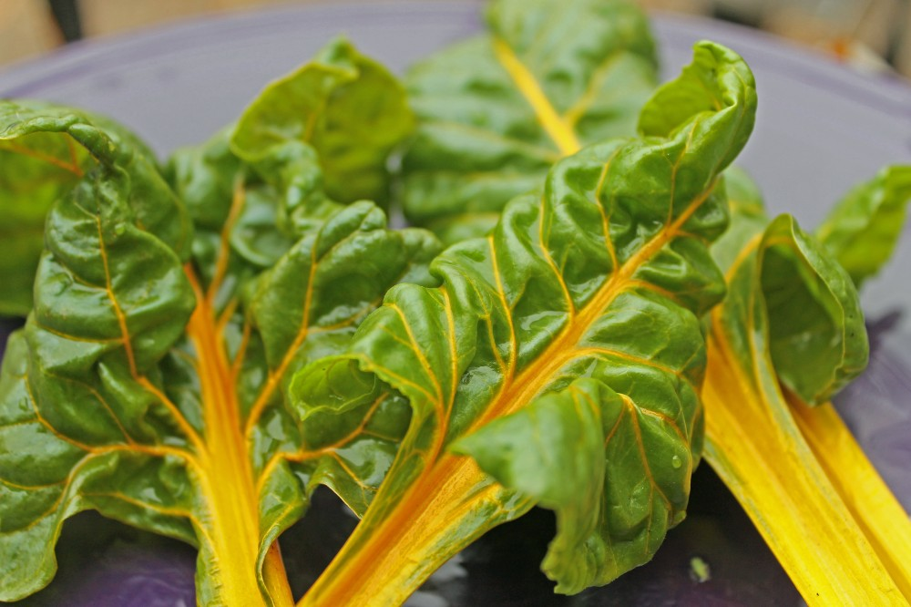 You only need a few Swiss Chard leaves and they keep regrowing pretty quickly...