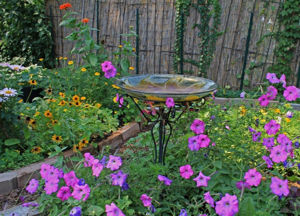 Old fashioned Petunias, marigolds, cosmos, celery leaf, sweet potatoes, basil, tatsoi, zinnias, nasturtium and china aster
