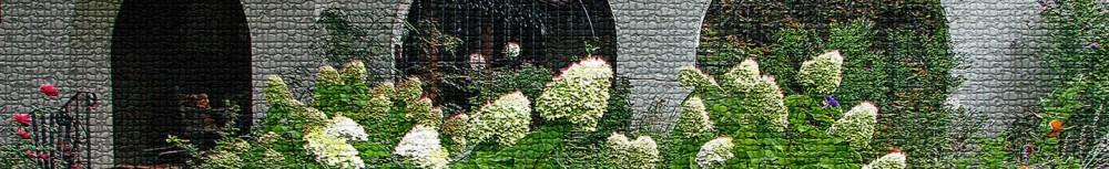 cropped-2011-front-yard-orange-zinnia-veggies-sept-9th-010_edited-2.jpg
