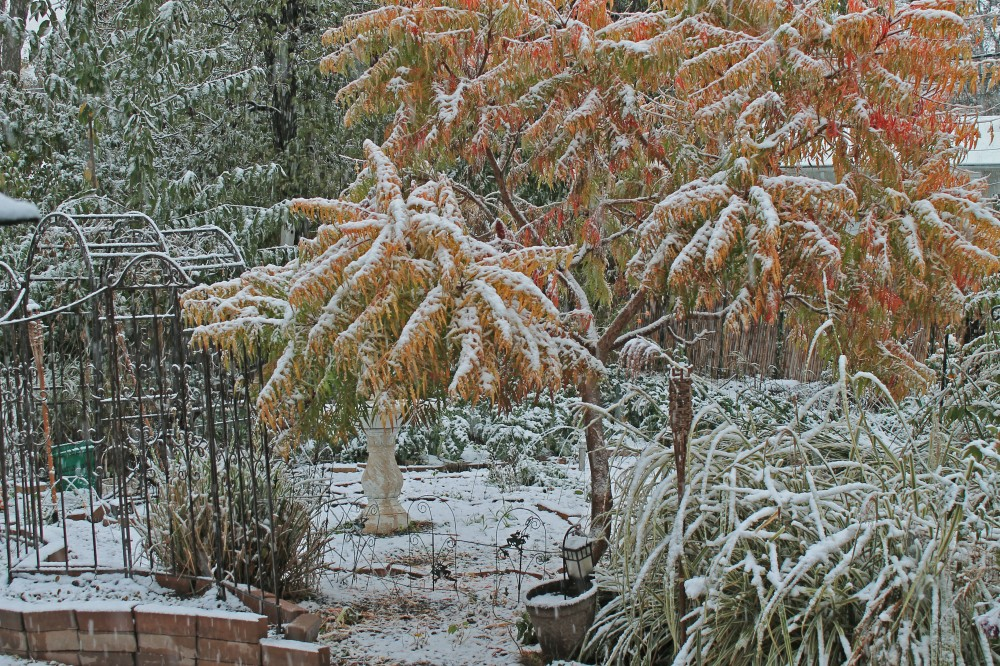 Wet, heavy snow is covering the winter/fall vegetables...