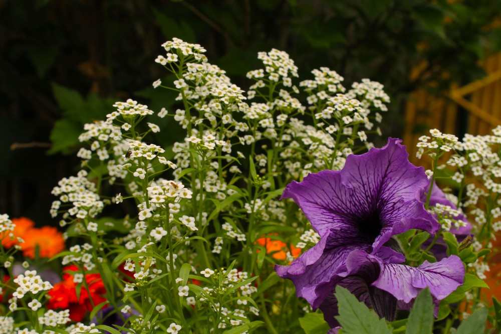 pots mixed with a variety of pollinator friendly plants can help just sitting on a porch...and some fun plants like my Big Daddy Petunia for scent which I like to smell when I am sitting out in the garden!